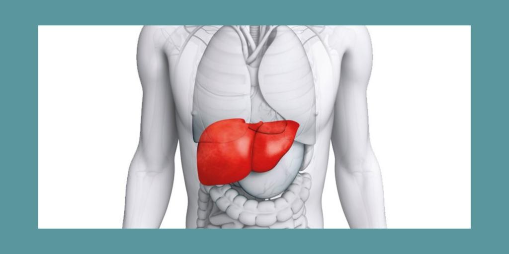 AKTA Liv - endocrinologista vila mariana - endocrinologia e metabologia - grodura no figado - esteatose hepática - fígado